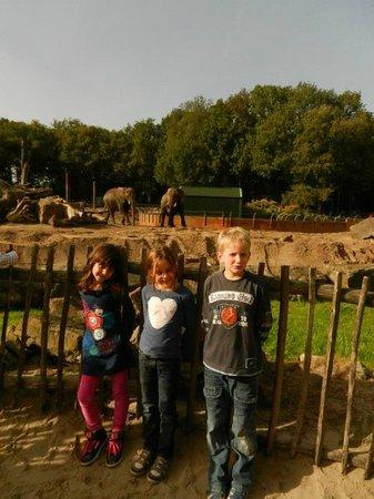 Ouwehands Dierenpark Rhenen:                   Voor de olifanten