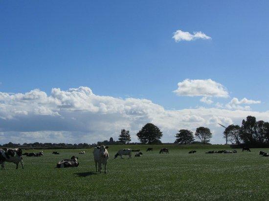 Landgoed Allingastate: Friesland countryside within reach