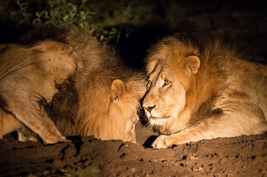Amakhosi Safari Lodge: more night shots