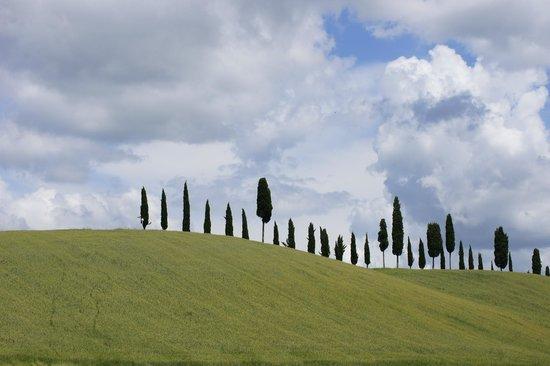 Tenuta Sant'Ilario:                   Toskana Pur