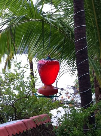 Catalina Beach Resort: feeder for birds hummingbird