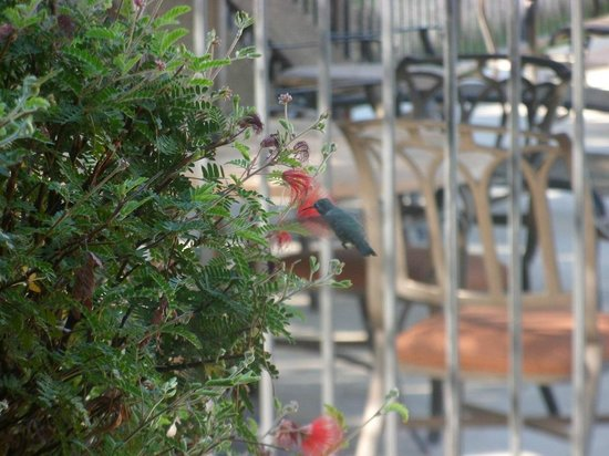 Borrego Springs Resort & Spa: A humming bird joined us on the terrace for breakfast