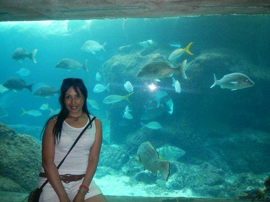 The Dig - Photo de Marine Habitat at Atlantis, Paradise Island ...