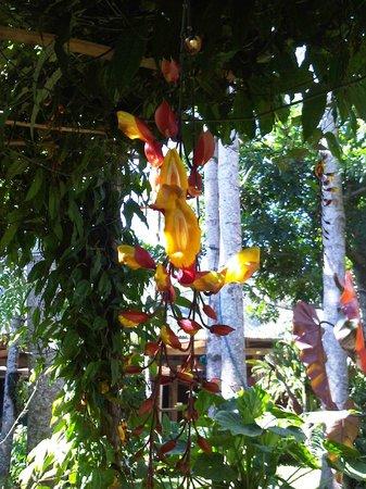 Meson de San Fernando: nuestra floricultura