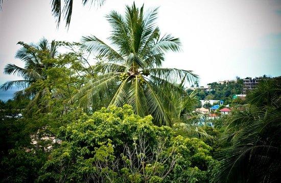 Kata Mountain Inn :                   Вид на море с балкона