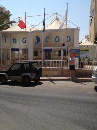 king cod