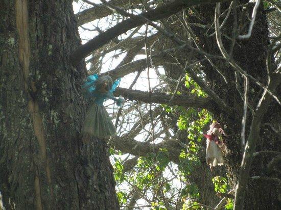 Parque Ecoturistico Cerro Viejo: hadas
