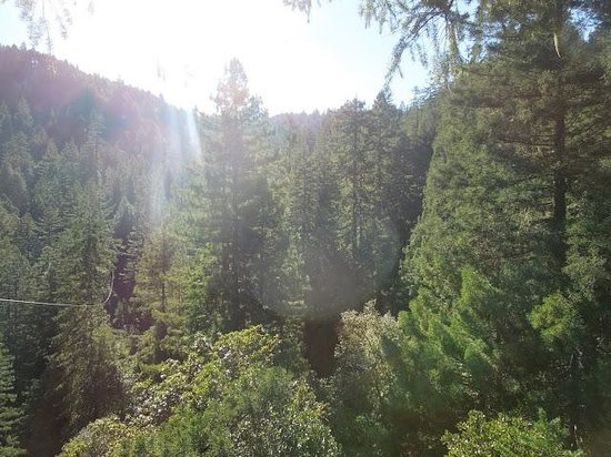 Sonoma Canopy Tours:                   View from the top