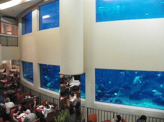 """Pacific Beach Hotel:                   Dinning room """"Oceanarium"""""""