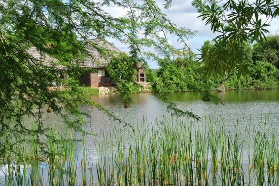 Ngwenya Lodge:                   Schöner See in dem auch geangelt werden darf