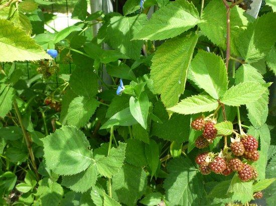 """Dimora di Bosco Room & Breakfast: giardino con le more in """"dimora di Bosco"""""""