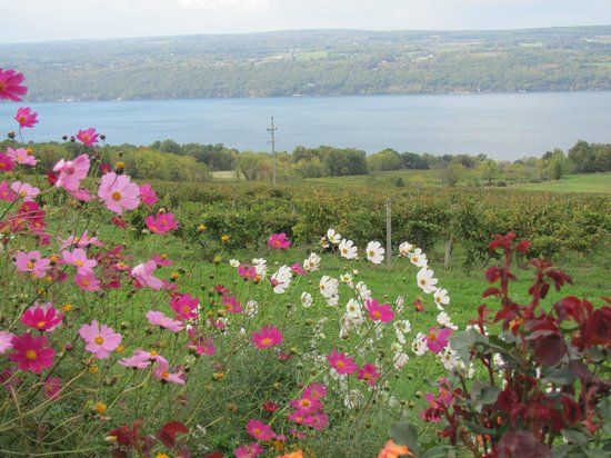 Atwater Estate Vineyards: Our cutting garden overlooking the vineyards and Seneca Lake