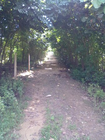 Botanix Nature Resort: The Tree Shadowing the Pathway