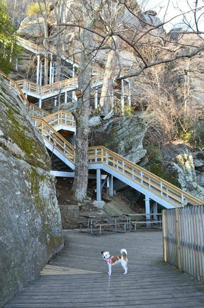 Chimney Rock State Park: January 2013: Tilly's getting ready to climb the 500+ steps to the top