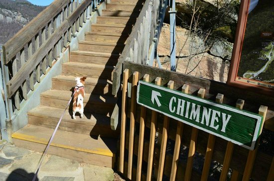 Chimney Rock State Park: January 2013: Almost there!!! Tilly climbed all the steps without stopping.