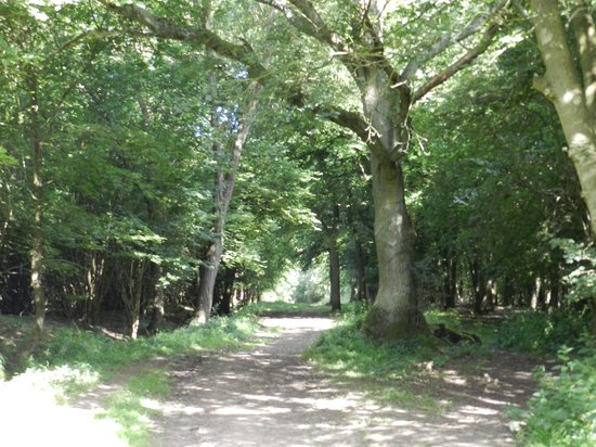 Hatfield Forest Nature Reserve: On a walk