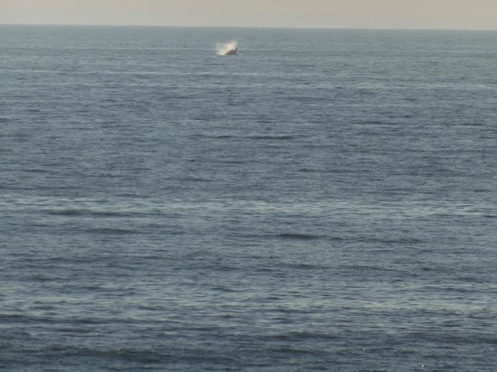 The Yachats Inn: whale watching
