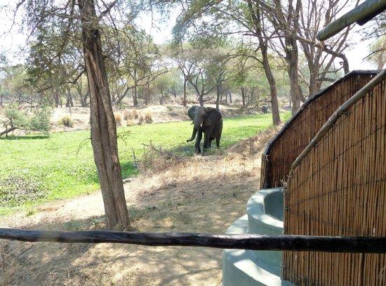 Old Mondoro Bush Camp: Außenbad mit Blick auf Lagune und Elefanten