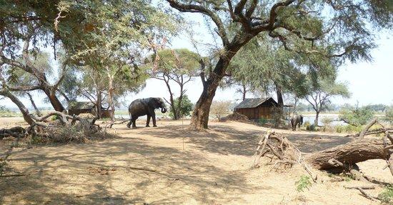 Old Mondoro Bush Camp: Einer der Elefanten auf dem Gelände