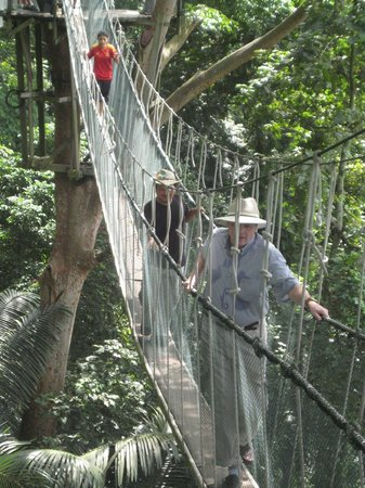 FRIM -Forest Research Institute of Malaysia Rainforest Canopy Walk at FRIM & Rainforest Canopy Walk at FRIM - Picture of FRIM -Forest Research ...