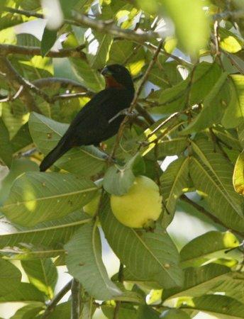 Tazanite Heights: Birds