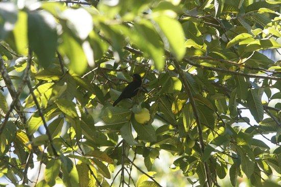 Tazanite Heights: Bird