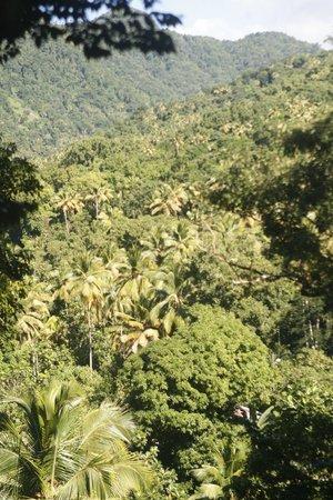 Tazanite Heights: Rainforest View