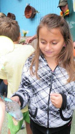 Gatorland: Feeding parakeets