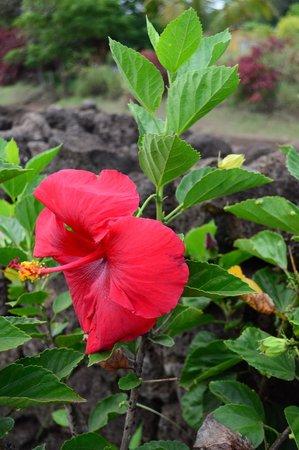 Cabañas Tautira: Flores alrededor de las Cabañas