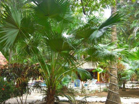Hotel El Manglar: Garden