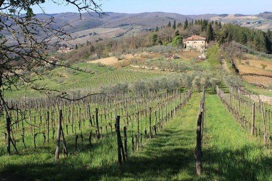 Villa Le Barone:                   Vineyards adjacent to the hotel