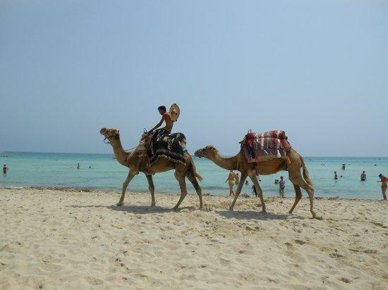 Vincci Helios Beach: plage