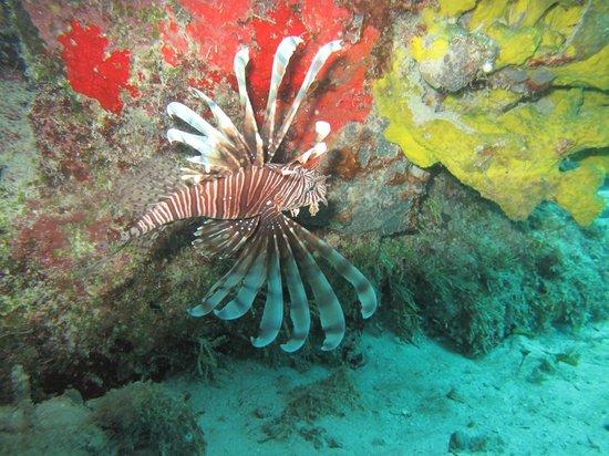 Cardona Reef