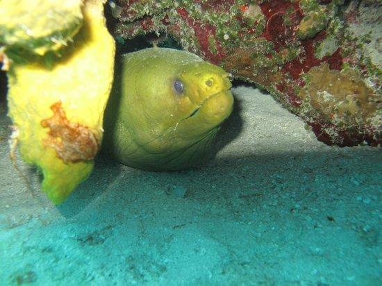 Cardona Reef : cozumel