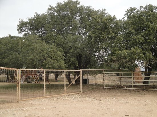 lining the ranch driveway are rustic southern oak trees metal