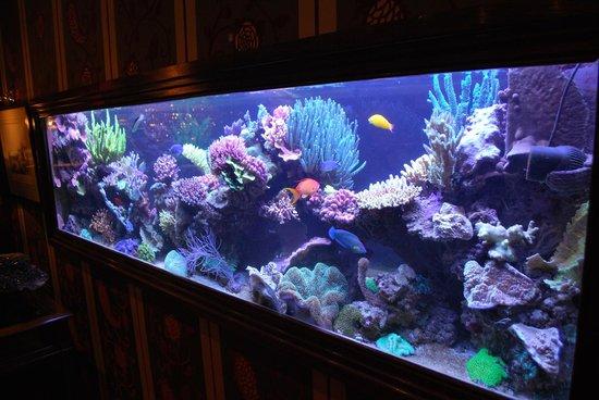 Hotel Estherea:                   Aquarium