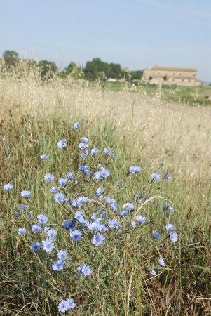 Agriturismo Podere Il Moro: campo !