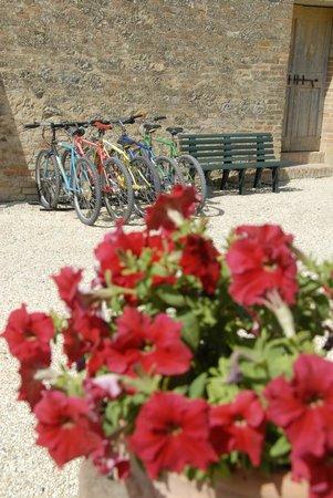 Agriturismo Podere Il Moro: mountain bike !