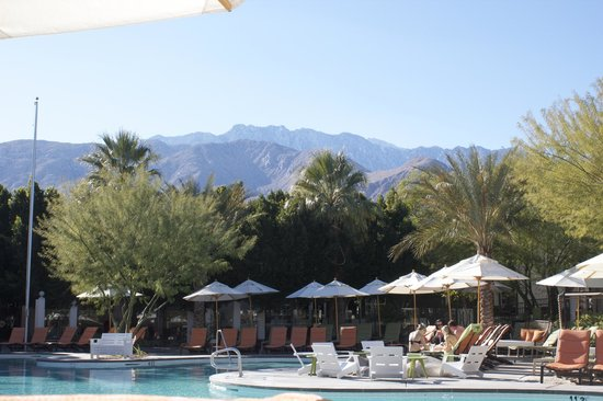 The Riviera Palm Springs, A Tribute Portfolio Resort:                   Pool view.  Note that the trees have grown a lot since the hotel's publicity s