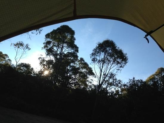 Discovery Parks - Cradle Mountain:                   dawn view from tent
