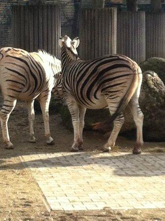 Tiergarten Schoenbrunn - Zoo Vienna: :)