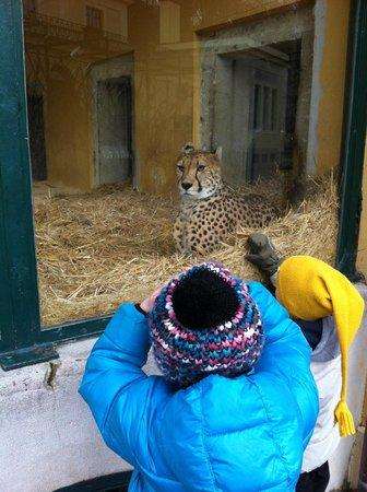 Зоопарк Шёнбрунн: Hello Kitty