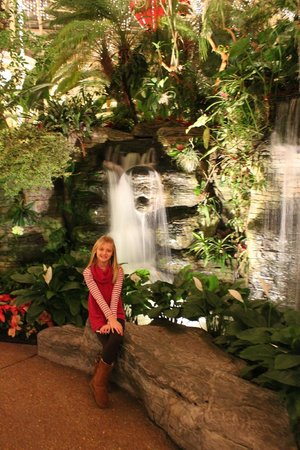 Gaylord Opryland Resort & Convention Center:                   Water fall