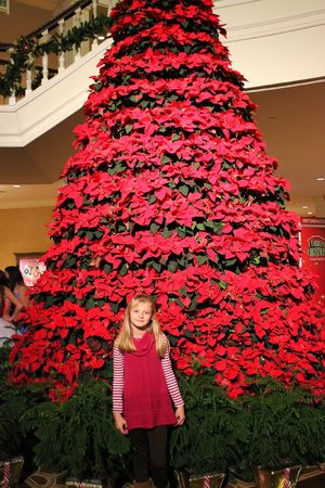 Gaylord Opryland Resort & Convention Center:                   Poinsetta tree