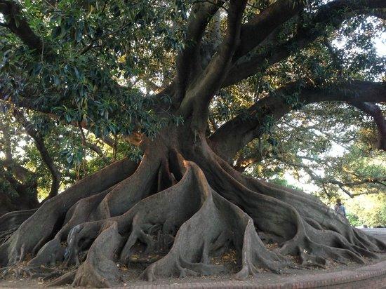 Recoleta : Massive tree stump