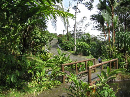 Lost Iguana Resort & Spa: Bridge from pool area