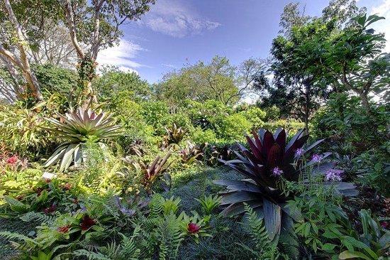 Hotel Bougainvillea: Bromeliads