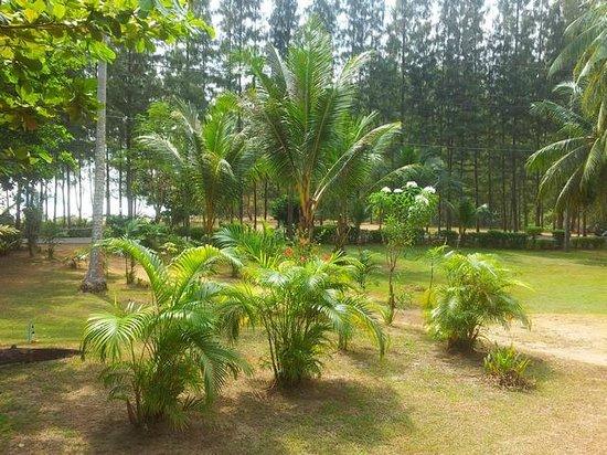 Koh Yao Beach Bungalows:                   Garden