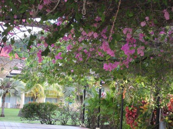 Radisson Grenada Beach Resort: The beautiful flowers surround you!
