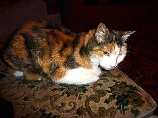 the adorable Marzipan the Astor Theatre Cat. If you are lucky she may sit on your lap